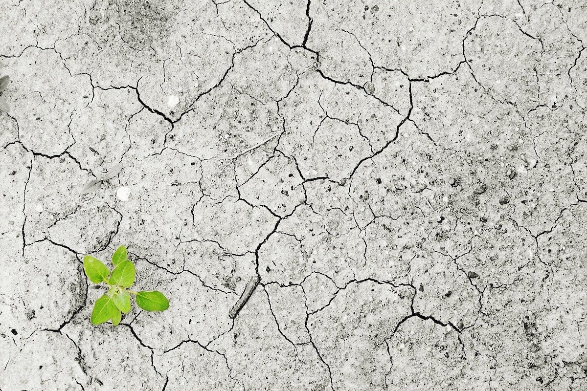 Status der Mikrobiologie in unseren Böden