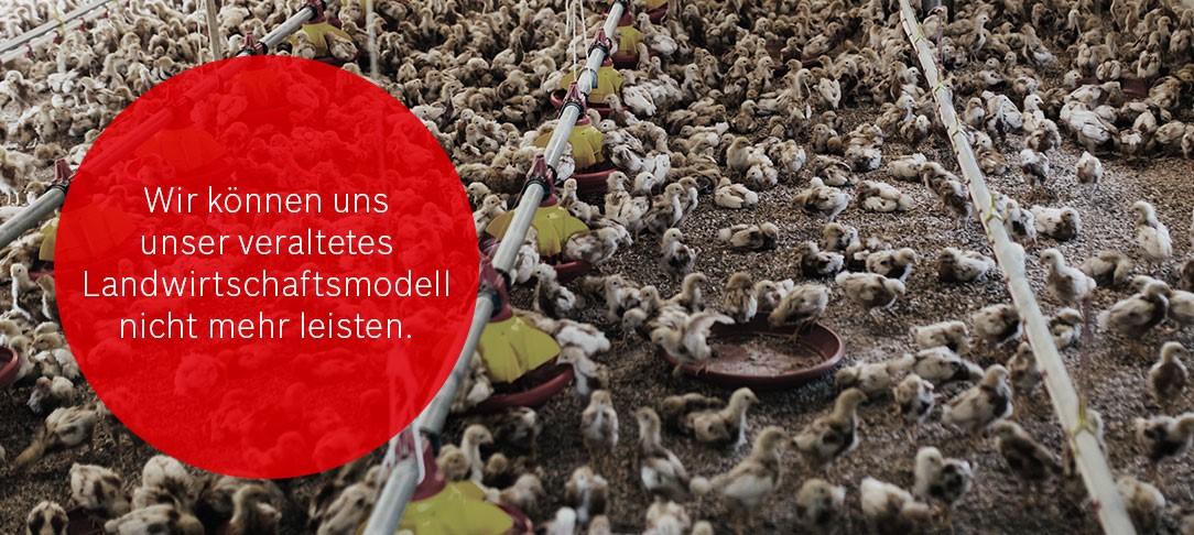 Wir können uns unser veraltetes Landwirtschaftsmodell nicht mehr leisten